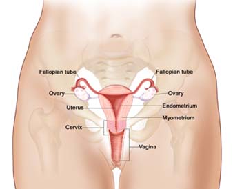ovary, oophorectomy, ovarian cancer, breast cancer, menopause, fallopian tube cancer